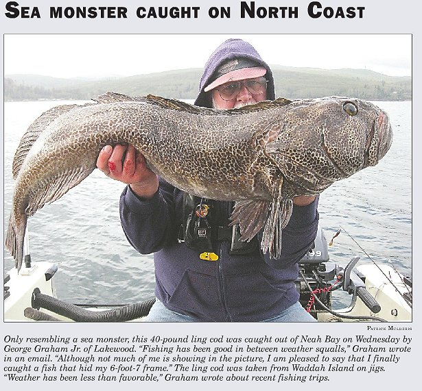 lingcod and man